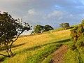 Pastures, Bassenthwaite - geograph.org.uk - 901952.jpg