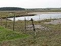 Pastures adjoining lagoons - geograph.org.uk - 1181046.jpg