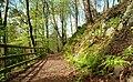 Path, Crawfordsburn Glen (3) - geograph.org.uk - 784998.jpg
