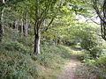 Path, through Langdon Wood - geograph.org.uk - 1454451.jpg