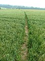 Path through a wheat field - geograph.org.uk - 191552.jpg