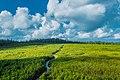 Pathway in forest (43225424564).jpg