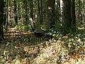 Peacok - panoramio (1).jpg