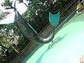 Peixe gigante na entrada do Beach Park - panoramio.jpg