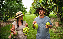 People with Mangos - Eye Steel Film.jpg