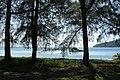 Perhentian Besar, Malaysia, Trees at the beach.jpg