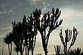 Peru - Lima 019 - afternoon silhouette (6853030068).jpg