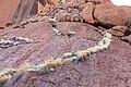 Petermann Ranges (AU), Uluru-Kata Tjuta National Park, Uluru, Kuniya Walk -- 2019 -- 3669.jpg