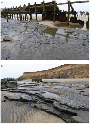 Happisburgh footprints - Photographs of Area A at Happisburgh, showing: (a) view of footprint surface looking north; and (b) view of footprint surface looking south, also showing underlying horizontally bedded laminated silts