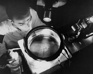 Alpha particle - A physicist observes alpha particles from the decay of a polonium source in a cloud chamber