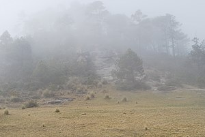 Puebla - Fog in the mountains near Zacatlán