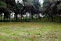 PikiWiki Israel 18943 Anemones in Beeri forest.JPG