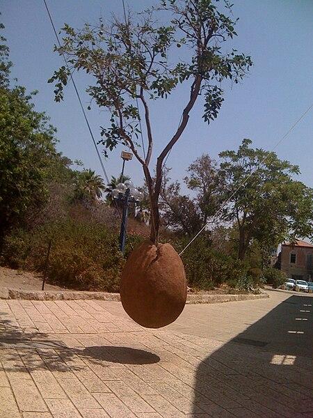 פסל - עץ תפוז מרחף