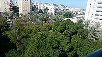 PikiWiki Israel 46413 Plants of Israel.jpg