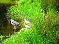 Pinckney Island National Wildlife Refuge (5958499254).jpg