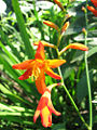 Plant-2008- 08 16.jpg