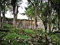 Plantes a les ruïnes de Kuelap.jpg