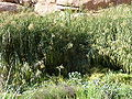 Plantes brandberg.JPG