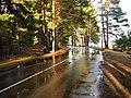 Pludi druvciema 2011 - panoramio (54).jpg