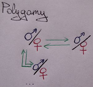A schematic showing the polygamy relationship....