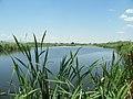 Pond in Ribarci village (1).jpg