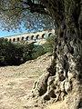 Pont du Gard, Olive Ancienne 1 - panoramio.jpg