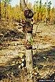 Populus spp. Rhizobium radiobacter.jpg