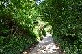 Powerstock - Country Lane (geograph 5505538).jpg