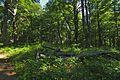 Prírodná rezervácia Borsukov vrch, Národný park Poloniny (09).jpg