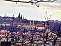 Pražský hrad od Vinohrad.jpg