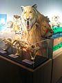 Predator Exhibit at DSP Tyler, Texas.jpg