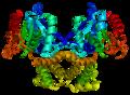 Protein FASN PDB 1xkt.png