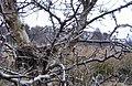 Ptaki ciernistych krzewów - panoramio.jpg