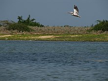 Pulicat Lake Sanctuaries