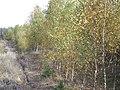Puszcza Bydgoska - panoramio (6).jpg
