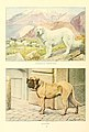 Pyrenean sheep-dog, mastiff.jpg