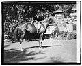 Quidron, General Pershing's horse LCCN2016828692.jpg