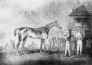 Quiz (horse) - Quiz, engraving by Ben Marshall