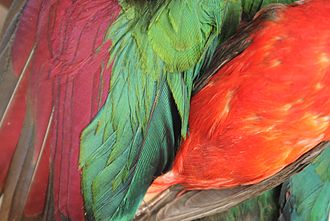 Exaptation - Bird feathers of various colors
