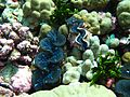 Reef2310 - Flickr - NOAA Photo Library.jpg