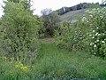 Regensammelbecken - Weinberg Kleinaspach - geo.hlipp.de - 35562.jpg