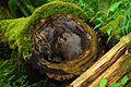 Rezerwat ochrony scisłej BPN 05.jpg