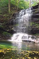 A relatively small amount of water drops from a ledge and falls in front of layers of rock into a large pool covered with a scattering of floating green and yellow leaves. Green vegetation is visible on the rocks above and behind the falls.