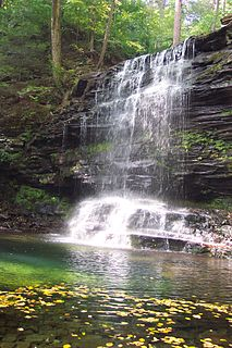 Ricketts Glen State Park State park in Pennsylvania, United States