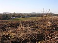 Rhubarb field - geograph.org.uk - 1071803.jpg