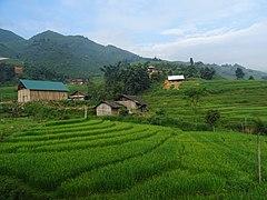 Rice terraces in Tả Van 14.jpg
