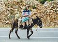 Riding donkey with a old female shepherd.jpg