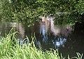 River Avon at Malmesbury - geograph.org.uk - 2518249.jpg