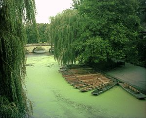 Fish kill - A small algae bloom on River Cam near Trinity College