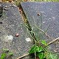 Rock-cornwall-england-tobefree-20150714-201423-3.jpg